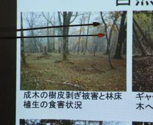 自然林鹿被害