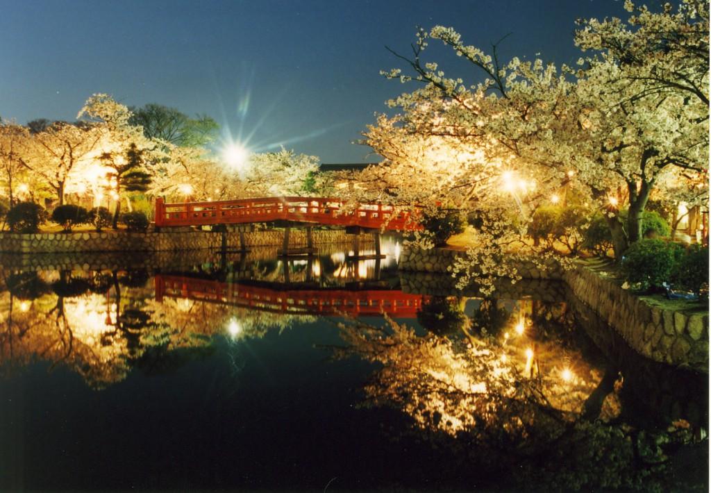 4 九華公園夜桜