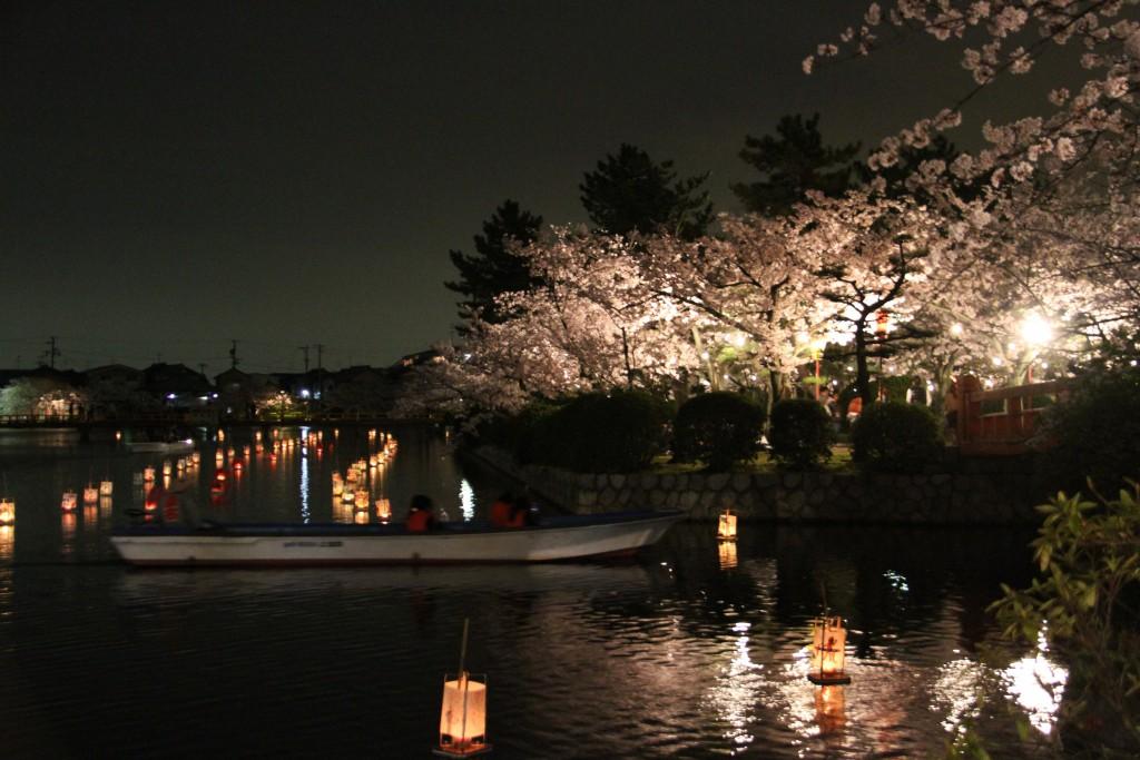 19 夜桜 (1)