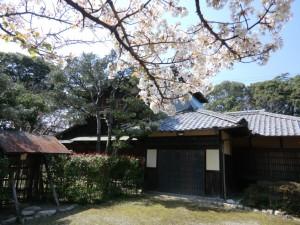 諸戸徳成邸桜160327