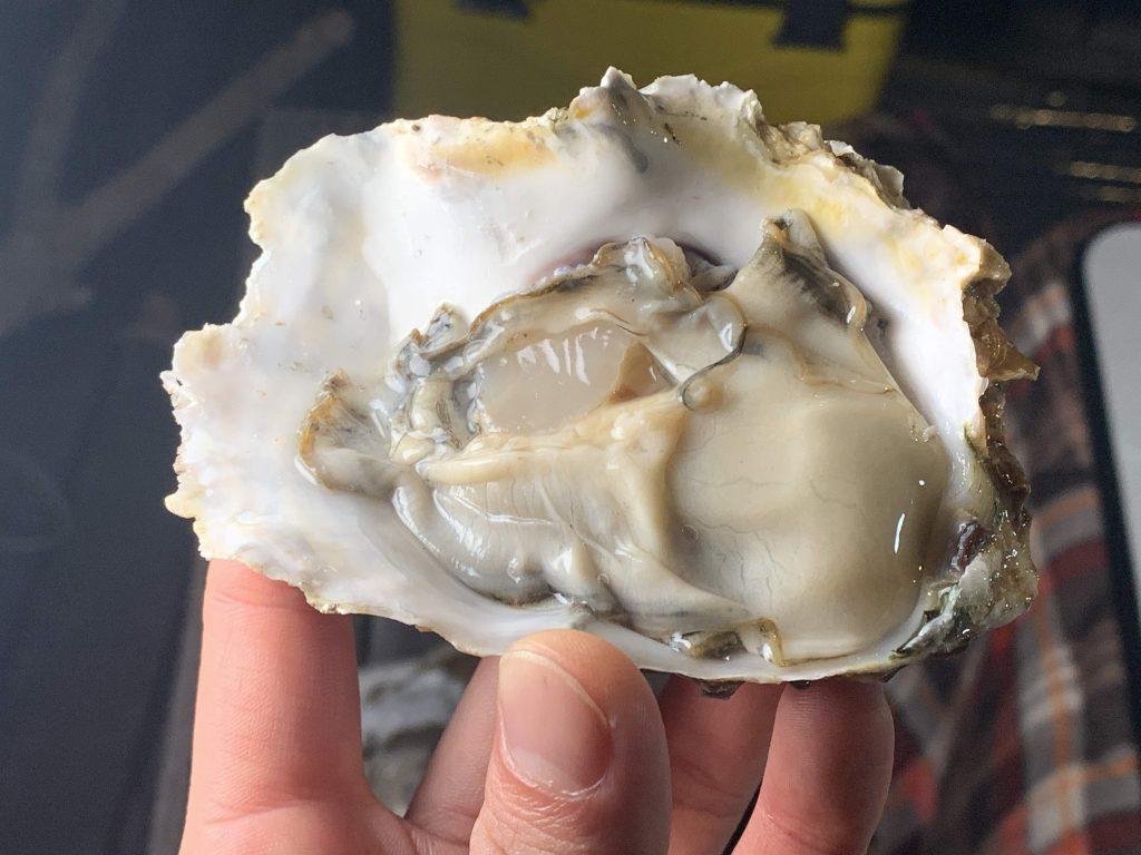 新鮮な生牡蠣