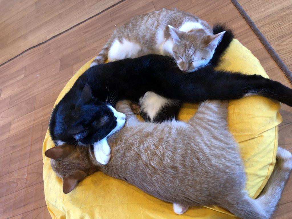 肩こりににゃらにゃい猫