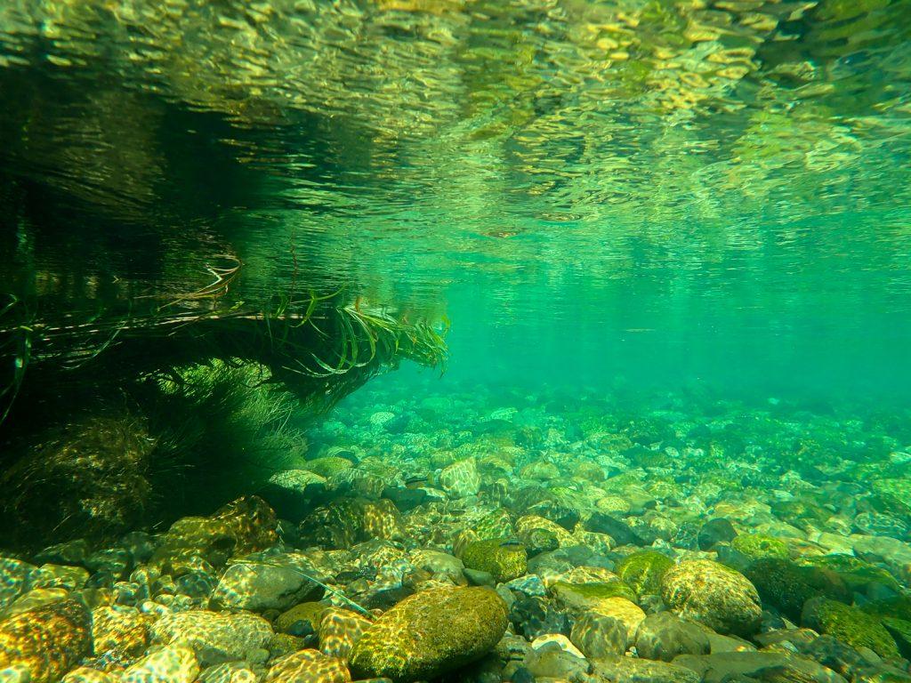 銚子川 水中
