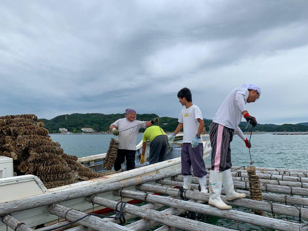 牡蠣の種差し 助け合う養殖業者さんの風景