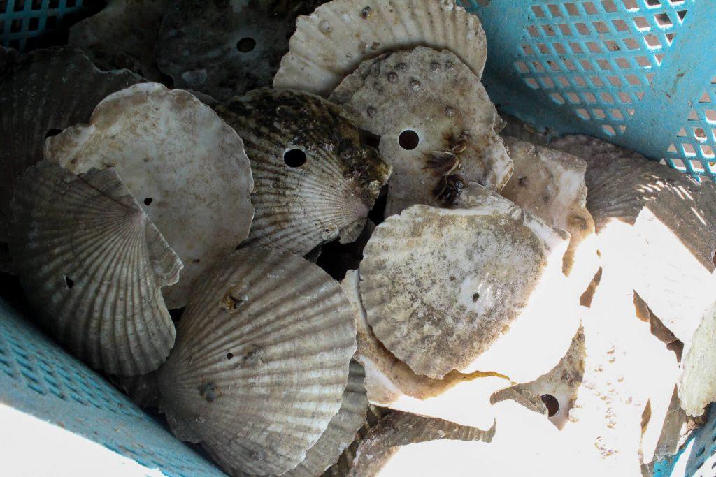 牡蠣の種差し 種の種が少ないもの
