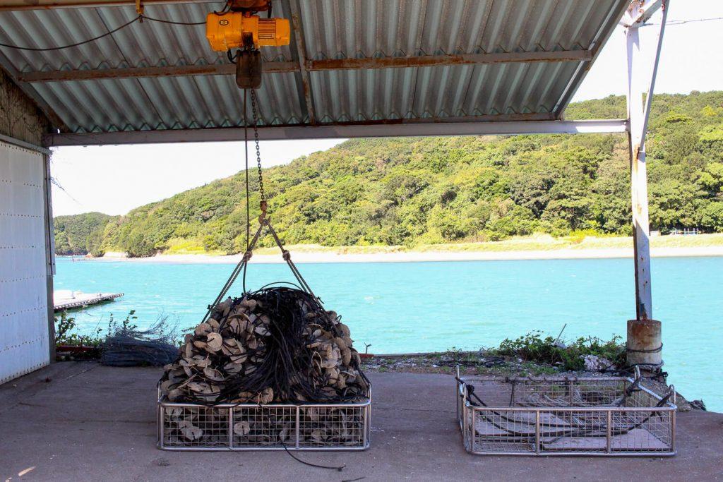 牡蠣の種差し 束ねた牡蠣の種ロープの籠盛りをクレーンで吊るし運ぶ