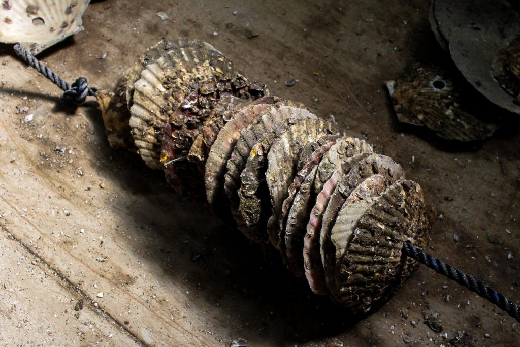 牡蠣の種差し 牡蠣の種ロープ完成