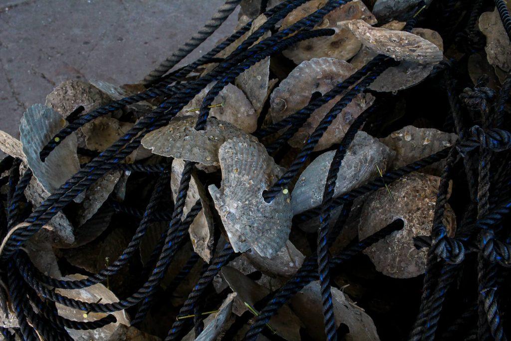 牡蠣の種差し 束ねた牡蠣の種ロープ