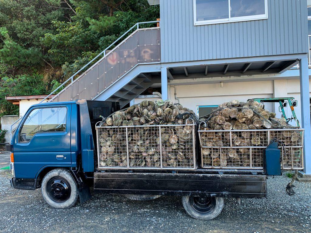 牡蠣の種差し 宮城県から届いた牡蠣の種