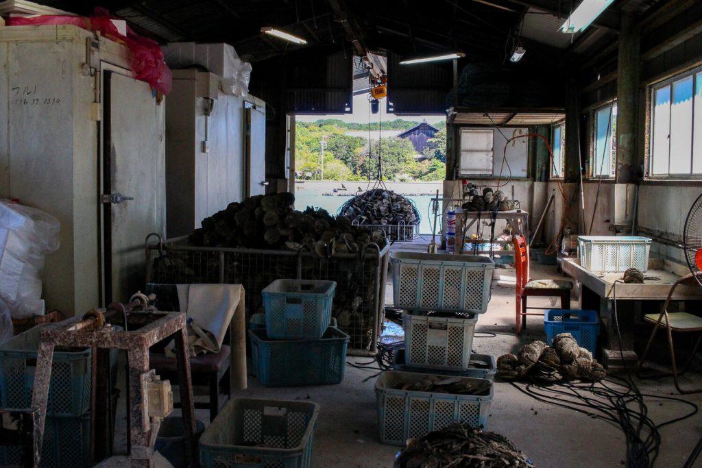 牡蠣の種差し 加工場の全体