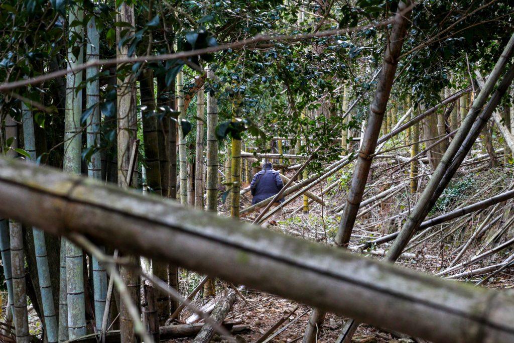 鳥羽市藤野郷で暮らす杉田さんとまち歩き 赤土山竹やぶ1